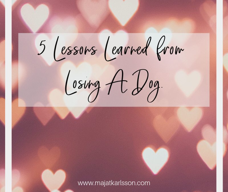 5 Lessons Learned from Losing A Dog